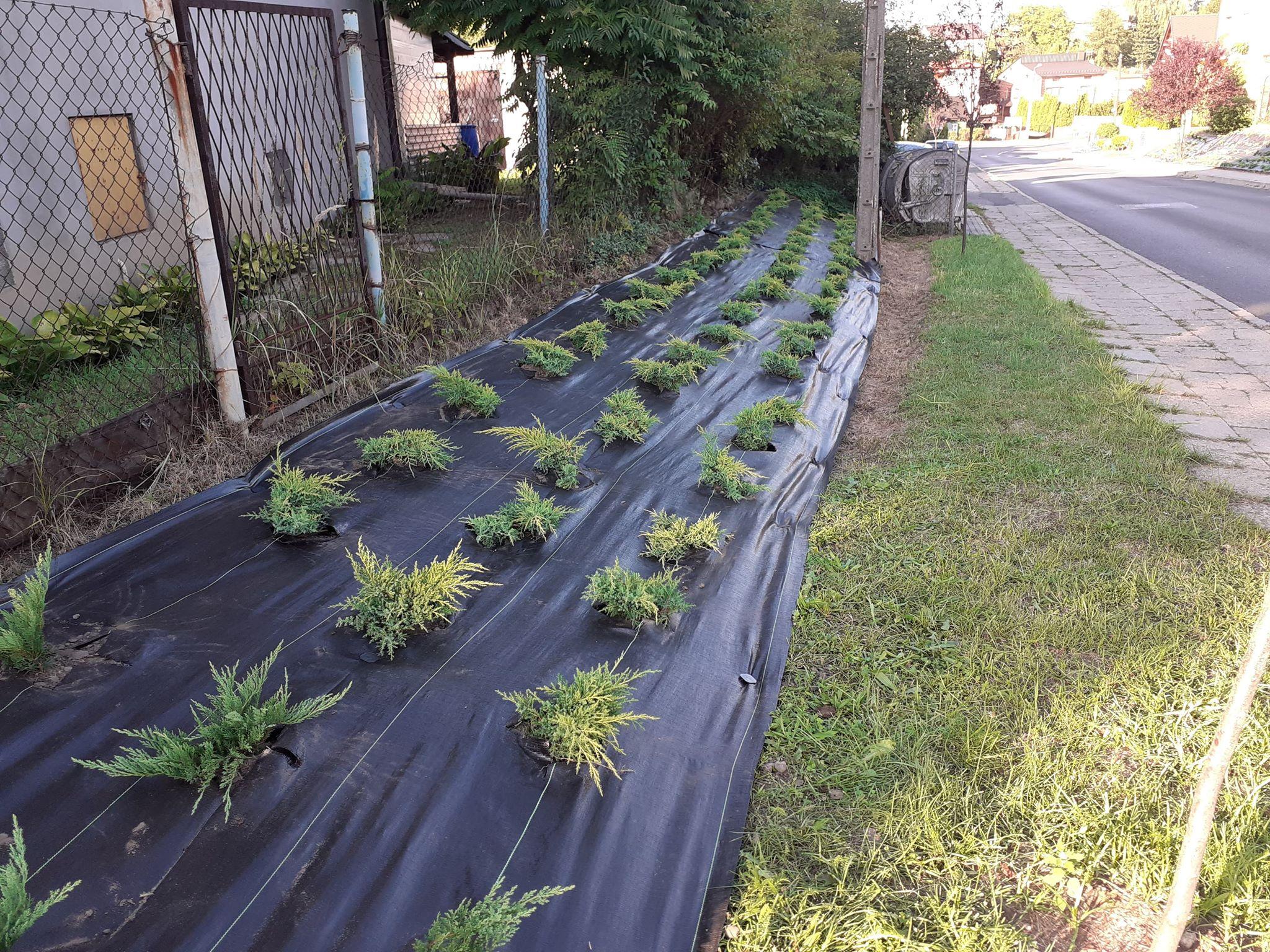 Sadzonki roślin przy asfaltowej drodze