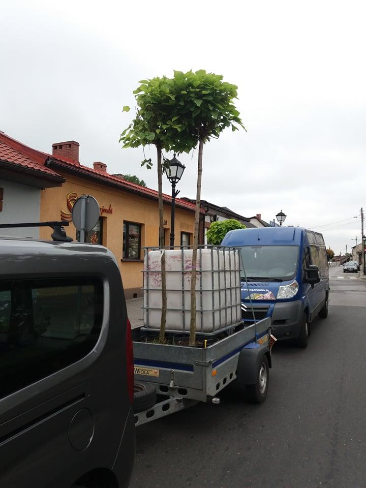 Samochód z przyczepą, na której znajduje się sadzonka drzewa