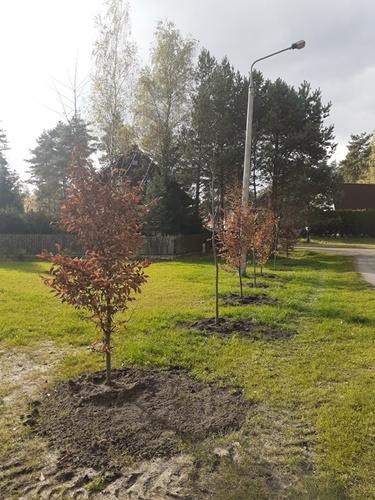 Świeżo posadzone sadzonki drzewek
