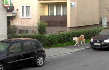 SM w Sławkowie (zrzut z kamery monitoringu)